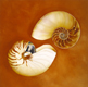 Thumbnail of Still Life with Nautilus # 2, a painting by Sandy Freckleton Gagon